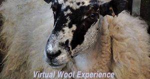 virtual wool experience